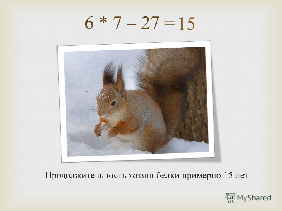 6 * 7 – 27 = Продолжительность жизни белки примерно 15 лет. 15