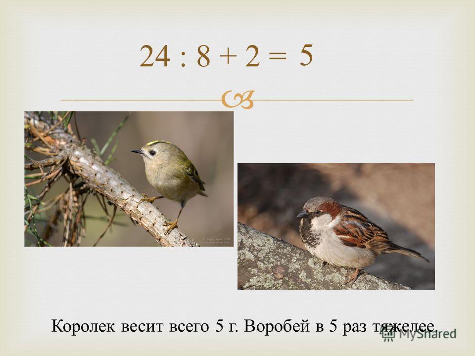 24 : 8 + 2 = Королек весит всего 5 г. Воробей в 5 раз тяжелее. 5