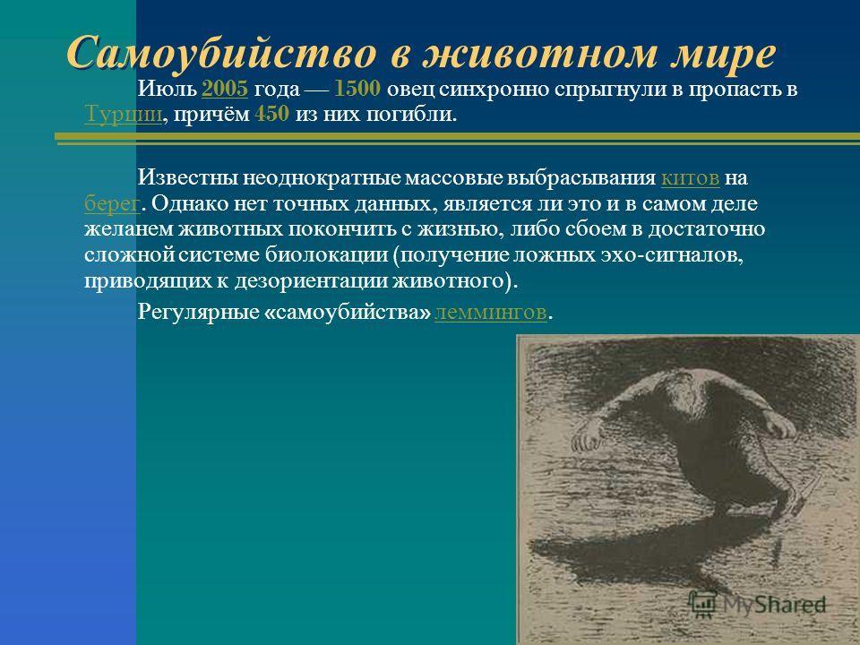 Самоубийство в животном мире Июль 2005 года 1500 овец синхронно спрыгнули в пропасть в Турции, причём 450 из них погибли.2005 Турции Известны неоднократные массовые выбрасывания китов на берег. Однако нет точных данных, является ли это и в самом деле