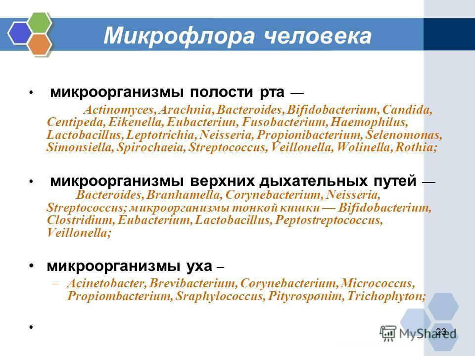23 Микрофлора человека микроорганизмы полости рта Actinomyces, Arachnia, Bacteroides, Bifidobacterium, Candida, Centipeda, Eikenella, Eubacteriun, Fusobacterium, Haemophilus, Lactobacillus, Leptotrichia, Neisseria, Propionibacterium, Selenomonas, Sim