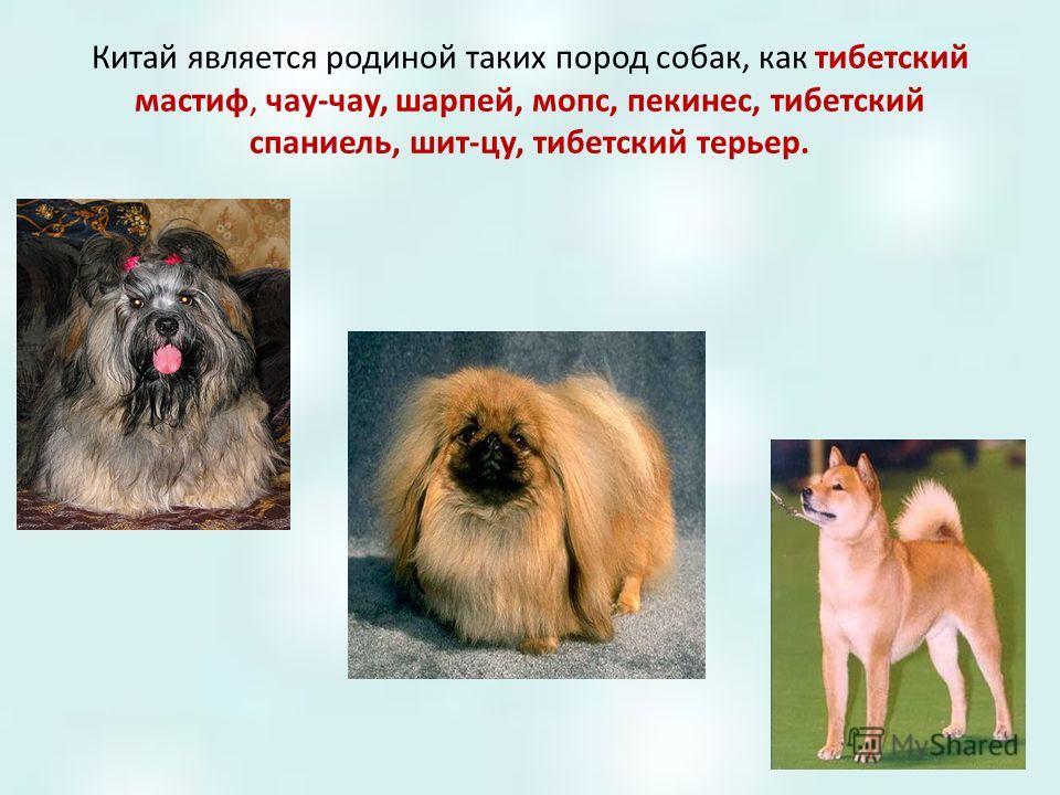 Китай является родиной таких пород собак, как тибетский мастиф, чау-чау, шарпей, мопс, пекинес, тибетский спаниель, шит-цу, тибетский терьер.