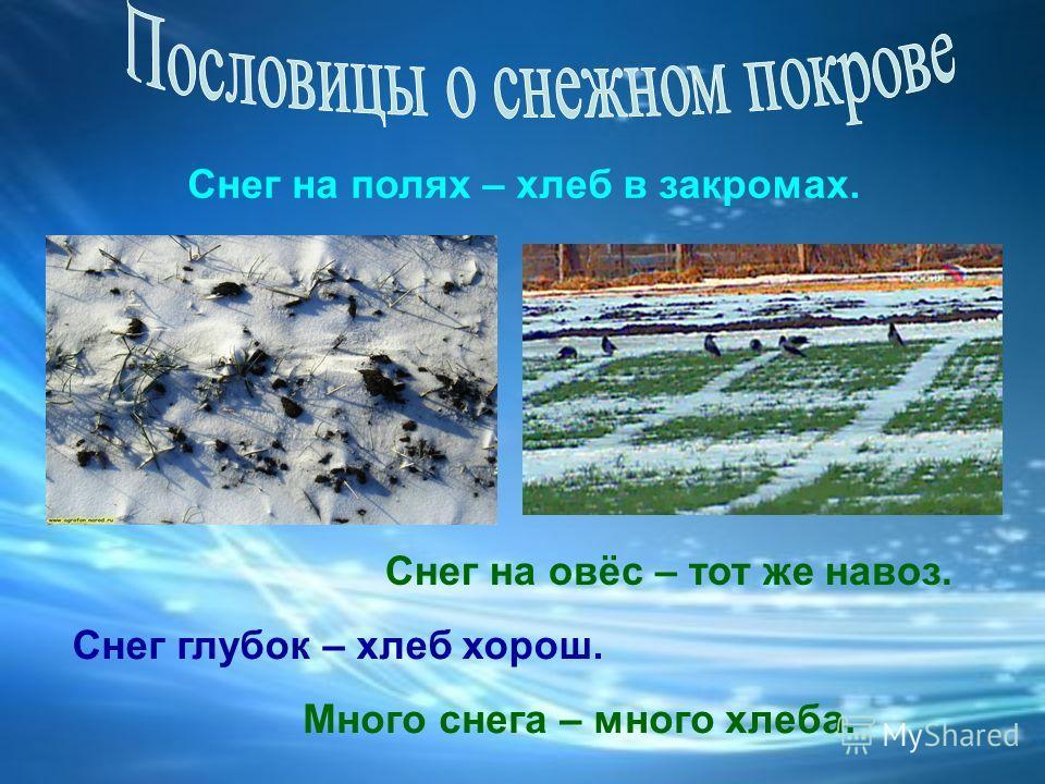 Не все травы желтеют… Копытень Земляника Озимая рожь Эти растения снег защищает от мороза.