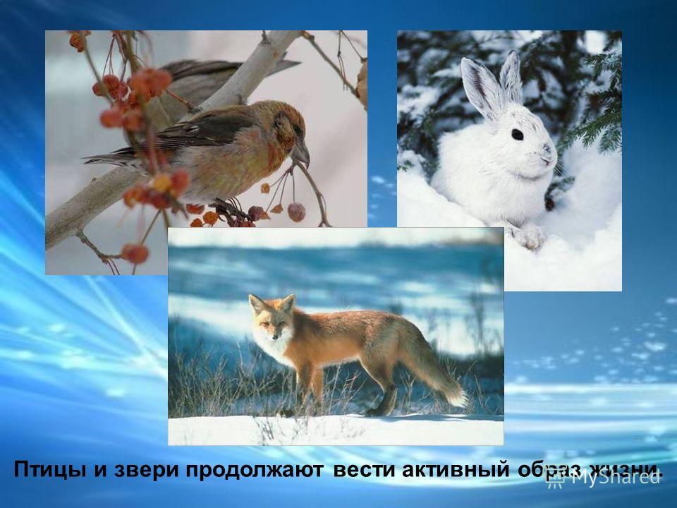 Зимой в жизни насекомых, рыб, пресмыкающихся, земноводных наступает затишье.