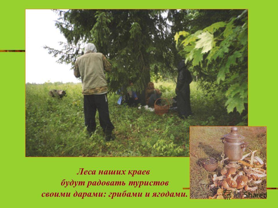 Леса наших краев будут радовать туристов своими дарами: грибами и ягодами.