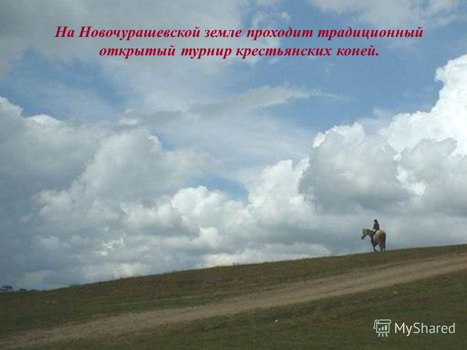 На Новочурашевской земле проходит традиционный открытый турнир крестьянских коней.