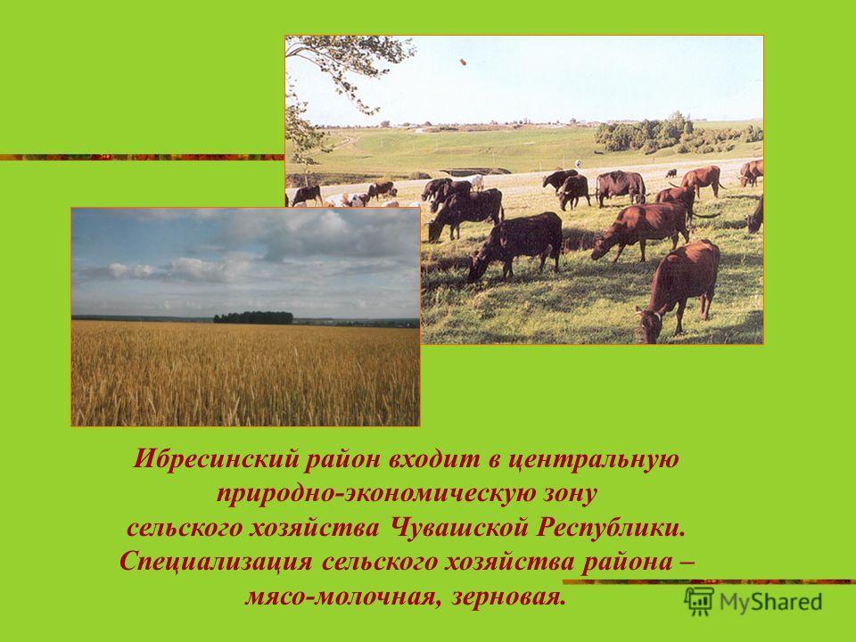 Ибресинский район входит в центральную природно-экономическую зону сельского хозяйства Чувашской Республики. Специализация сельского хозяйства района – мясо-молочная, зерновая.