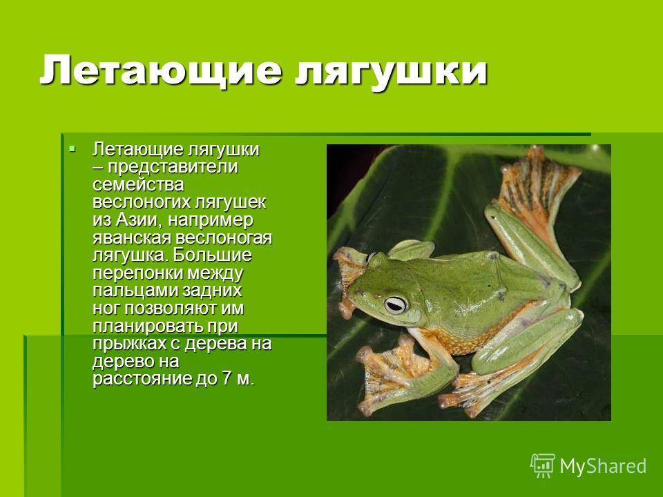 Летающие лягушки Летающие лягушки – представители семейства веслоногих лягушек из Азии, например яванская веслоногая лягушка. Большие перепонки между пальцами задних ног позволяют им планировать при прыжках с дерева на дерево на расстояние до 7 м. Ле