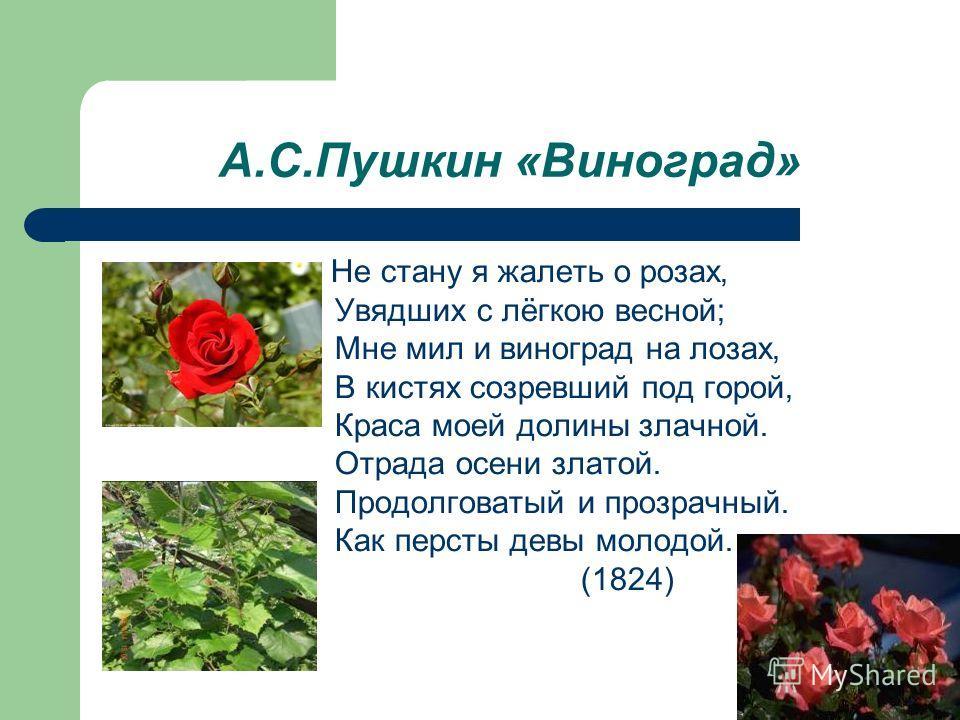 А.С.Пушкин «Виноград» Не стану я жалеть о розах, Увядших с лёгкою весной; Мне мил и виноград на лозах, В кистях созревший под горой, Краса моей долины злачной. Отрада осени златой. Продолговатый и прозрачный. Как персты девы молодой. (1824)