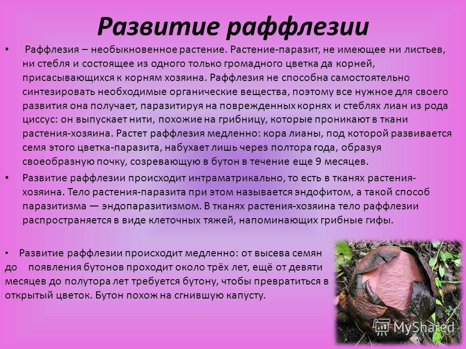 Открытие Раффлезии Арнольди Впервые раффлезию открыли на острове Суматре в 1818. Офицер Стемфорд Раффлз и ботаник Джозеф Арнольд составили первое научное описание растения и измерили его. Первооткрыватели присвоили ему довольно звучное имя – Раффлези