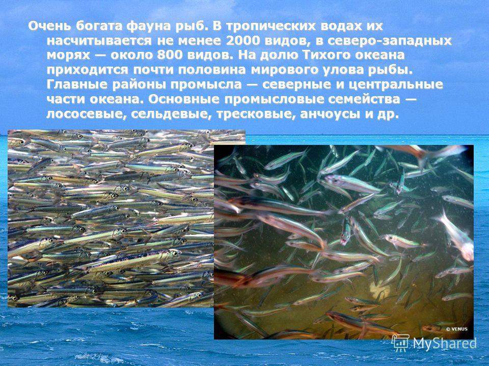 Очень богата фауна рыб. В тропических водах их насчитывается не менее 2000 видов, в северо-западных морях около 800 видов. На долю Тихого океана приходится почти половина мирового улова рыбы. Главные районы промысла северные и центральные части океан