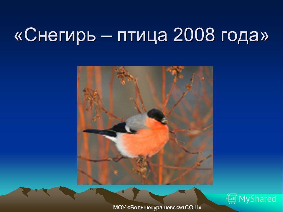 «Снегирь – птица 2008 года» МОУ «Большечурашевская СОШ»