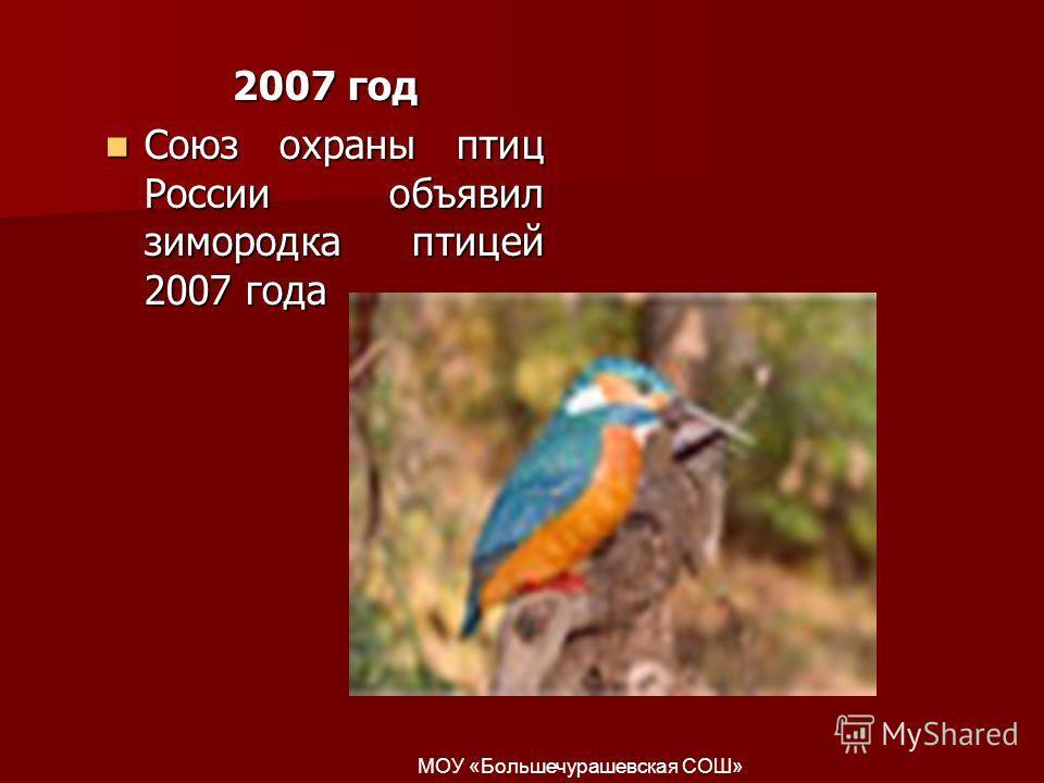 2007 год Союз охраны птиц России объявил зимородка птицей 2007 года Союз охраны птиц России объявил зимородка птицей 2007 года МОУ «Большечурашевская СОШ»