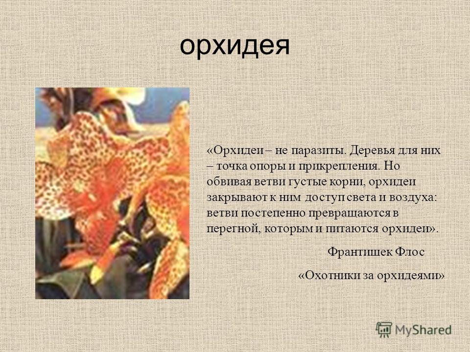 орхидея «Орхидеи – не паразиты. Деревья для них – точка опоры и прикрепления. Но обвивая ветви густые корни, орхидеи закрывают к ним доступ света и воздуха: ветви постепенно превращаются в перегной, которым и питаются орхидеи». Франтишек Флос «Охотни