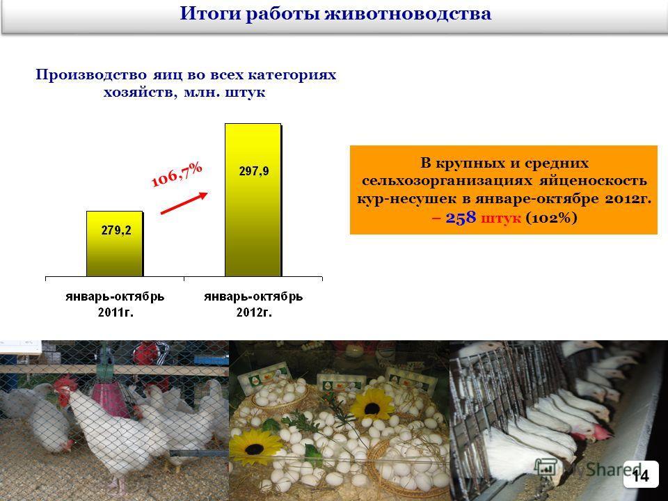 14 106,7% Итоги работы животноводства Производство яиц во всех категориях хозяйств, млн. штук В крупных и средних сельхозорганизациях яйценоскость кур-несушек в январе-октябре 2012г. – 258 штук (102%)