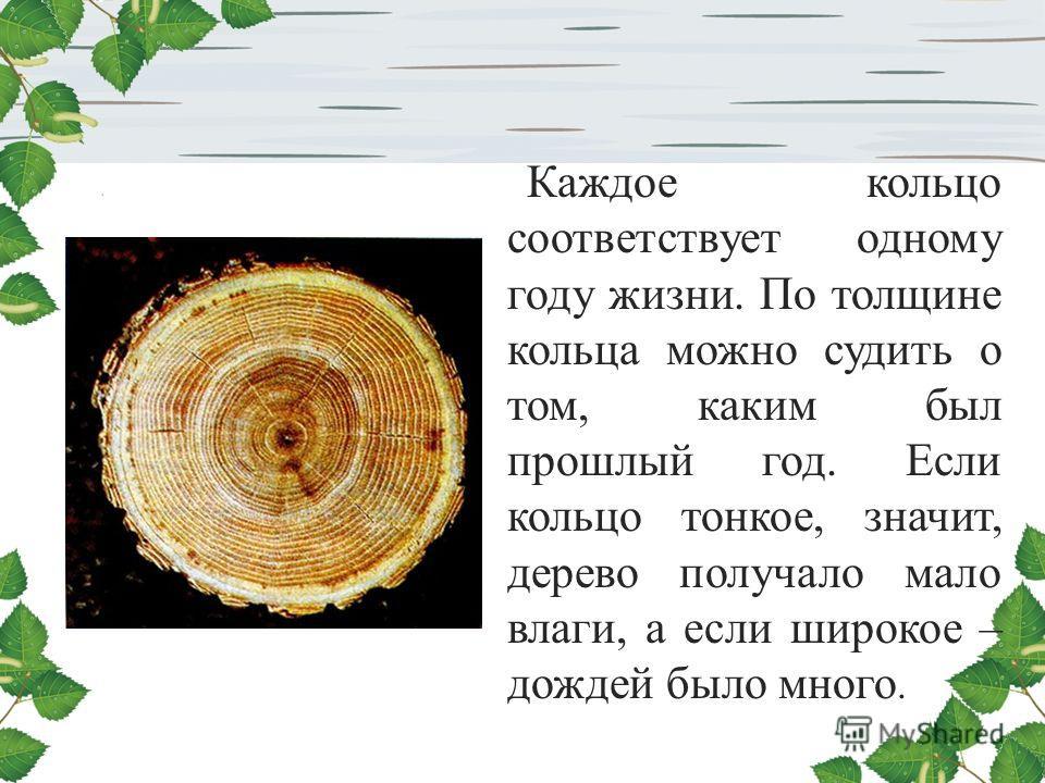 Каждое кольцо соответствует одному году жизни. По толщине кольца можно судить о том, каким был прошлый год. Если кольцо тонкое, значит, дерево получало мало влаги, а если широкое – дождей было много.