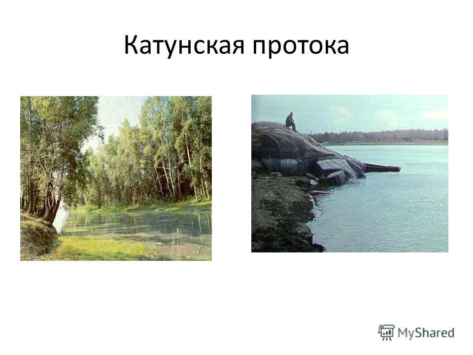 Катунская протока