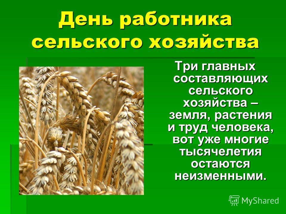 День работника сельского хозяйства Три главных составляющих сельского хозяйства – земля, растения и труд человека, вот уже многие тысячелетия остаются неизменными.