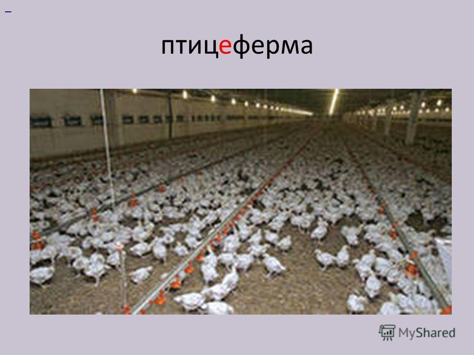 птицеферма