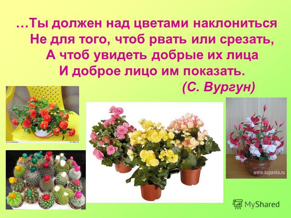 …Ты должен над цветами наклониться Не для того, чтоб рвать или срезать, А чтоб увидеть добрые их лица И доброе лицо им показать. (С. Вургун)