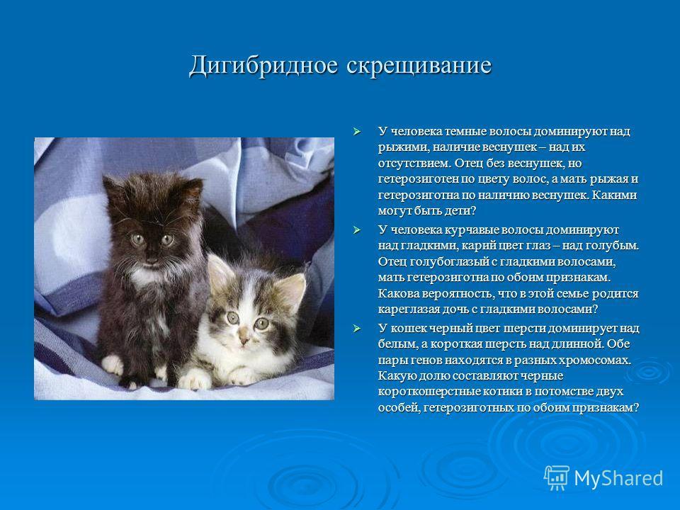 Дигибридное скрещивание У кошек добрый нрав преобладает над злым. Ген пушистости рецессивен. Какое потомство F1 и F2 можно ожидать от скрещивания двух гомозигот (доброй гладкой кошки и злого пушистого кота). У кошек добрый нрав преобладает над злым.