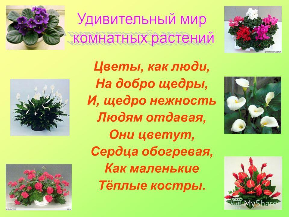 Цветы, как люди, На добро щедры, И, щедро нежность Людям отдавая, Они цветут, Сердца обогревая, Как маленькие Тёплые костры.