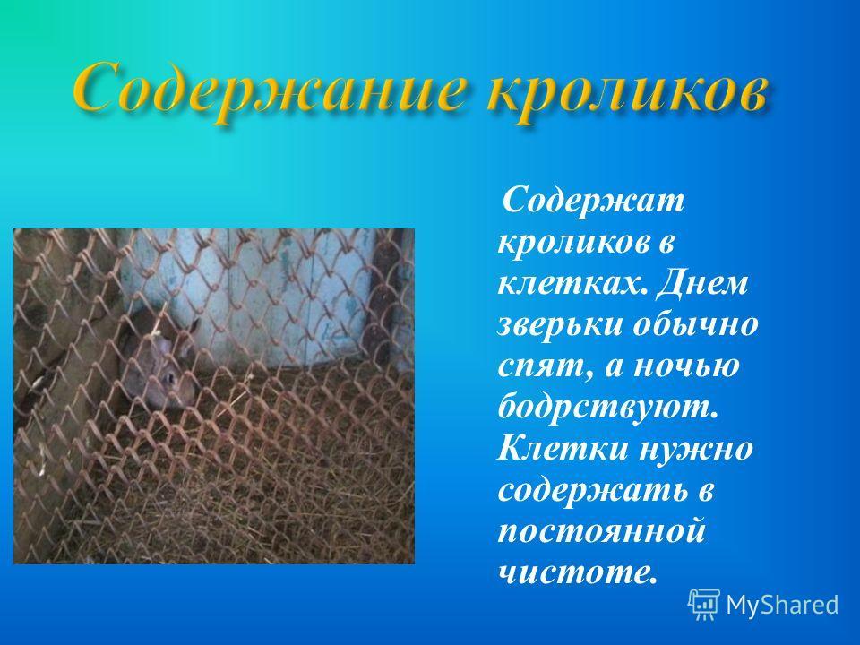 С одержат кроликов в клетках. Д нем зверьки о бычно спят, а н очью бодрствуют. Клетки н ужно содержать в постоянной чистоте.