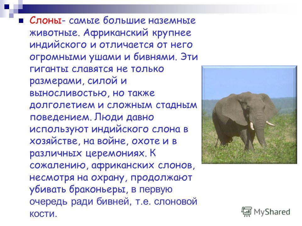 Слоны- самые большие наземные животные. Африканский крупнее индийского и отличается от него огромными ушами и бивнями. Эти гиганты славятся не только размерами, силой и выносливостью, но также долголетием и сложным стадным поведением. Люди давно испо