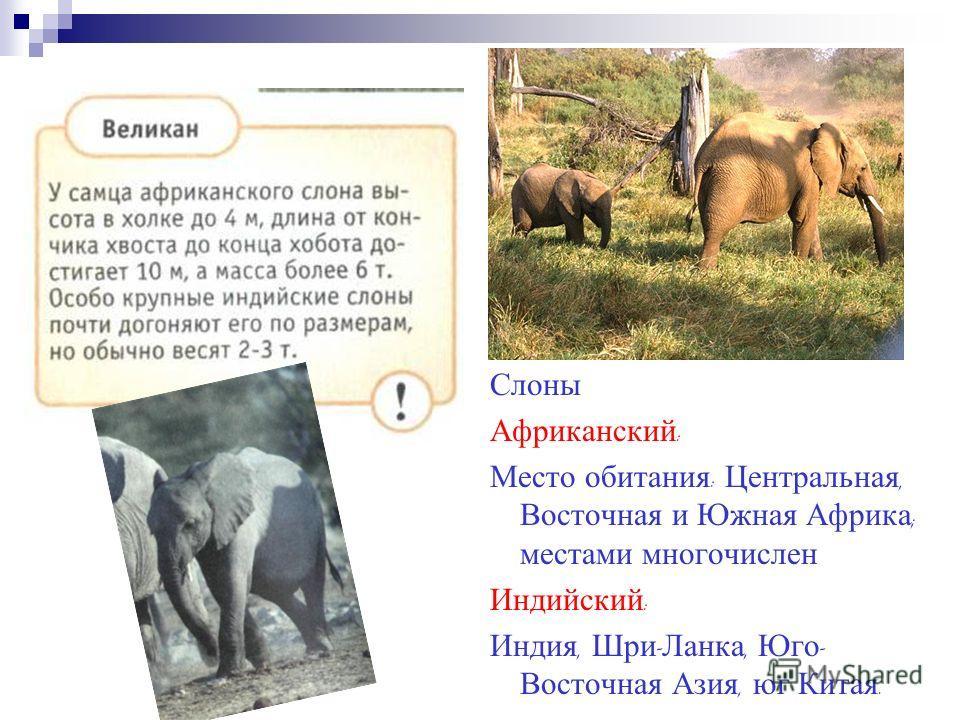 Слоны Африканский : Место обитания : Центральная, Восточная и Южная Африка ; местами многочислен Индийский : Индия, Шри - Ланка, Юго - Восточная Азия, юг Китая.