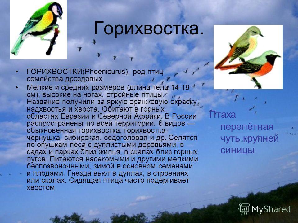 Горихвостка. ГОРИХВОСТКИ(Phoenicurus), род птиц семейства дроздовых. Мелкие и средних размеров (длина тела 14-18 см), высокие на ногах, стройные птицы. Название получили за яркую оранжевую окраску надхвостья и хвоста. Обитают в горных областях Еврази