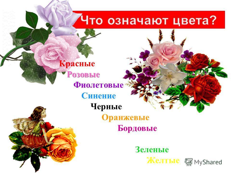Розовые Красные Розовые Фиолетовые Синение Черные Оранжевые Бордовые Белые Зеленые Желтые