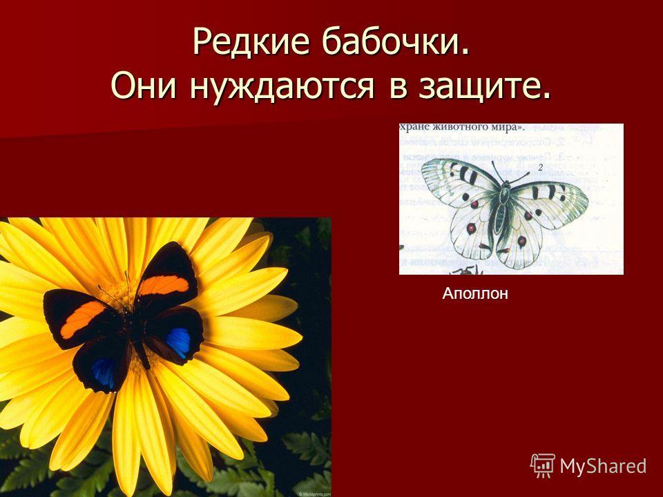 Редкие бабочки. Они нуждаются в защите. Аполлон