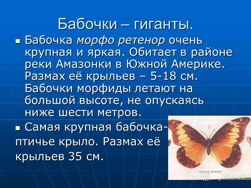 Бабочки – гиганты. Бабочка морфо ретенор очень крупная и яркая. Обитает в районе реки Амазонки в Южной Америке. Размах её крыльев – 5-18 см. Бабочки морфиды летают на большой высоте, не опускаясь ниже шести метров. Самая крупная бабочка- птичье крыло