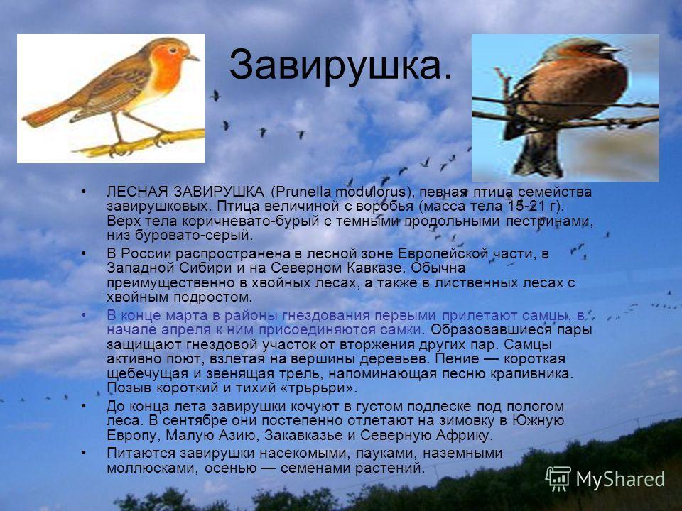 Завирушка. ЛЕСНАЯ ЗАВИРУШКА (Prunella modulorus), певчая птица семейства завирушковых. Птица величиной с воробья (масса тела 15-21 г). Верх тела коричневато-бурый с темными продольными пестринами, низ буровато-серый. В России распространена в лесной