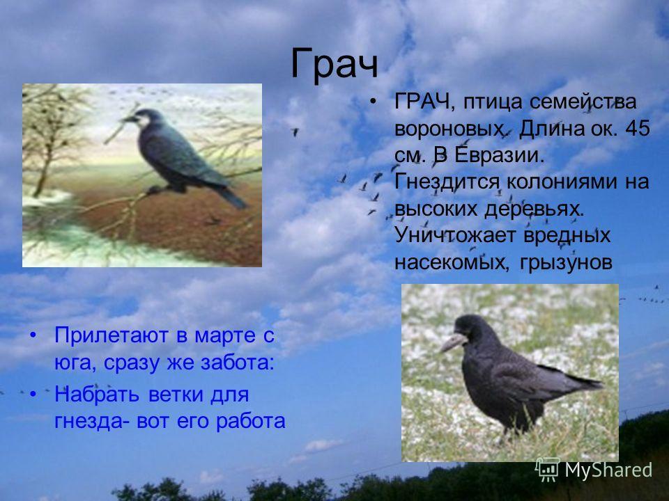 Презентация на тему Перелётные птицы Выполнили ученики класса  2 Грач Прилетают