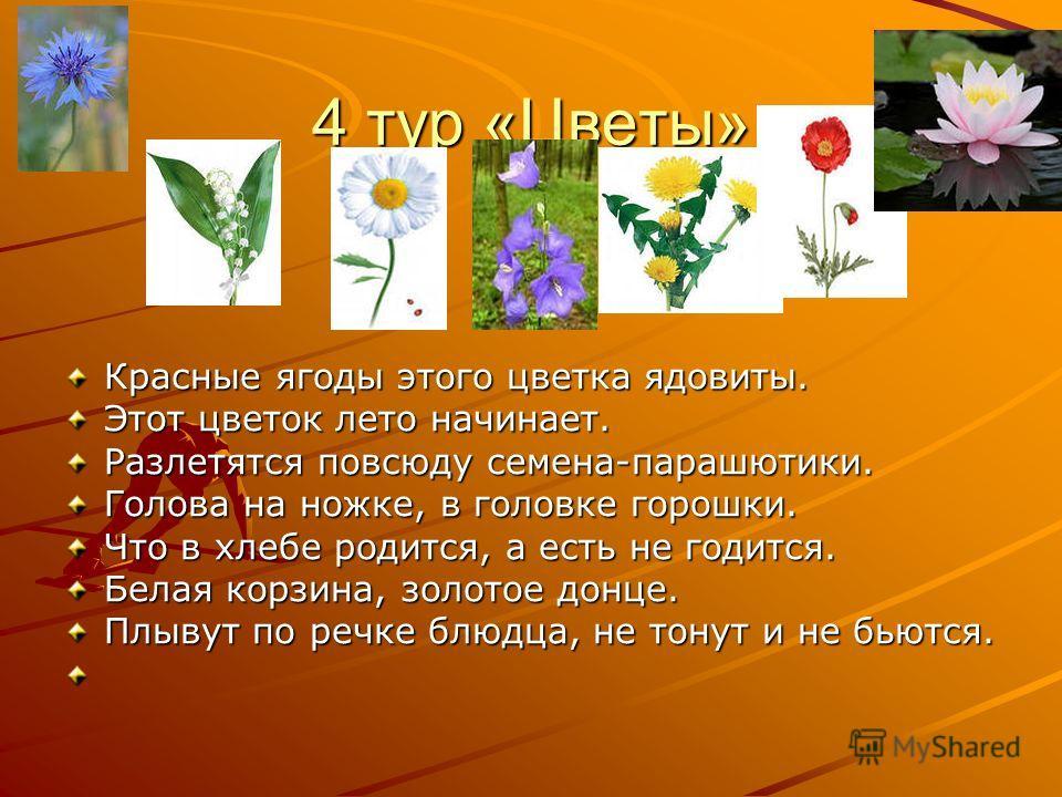 4 тур «Цветы» Красные ягоды этого цветка ядовиты. Этот цветок лето начинает. Разлетятся повсюду семена-парашютики. Голова на ножке, в головке горошки. Что в хлебе родится, а есть не годится. Белая корзина, золотое донце. Плывут по речке блюдца, не то