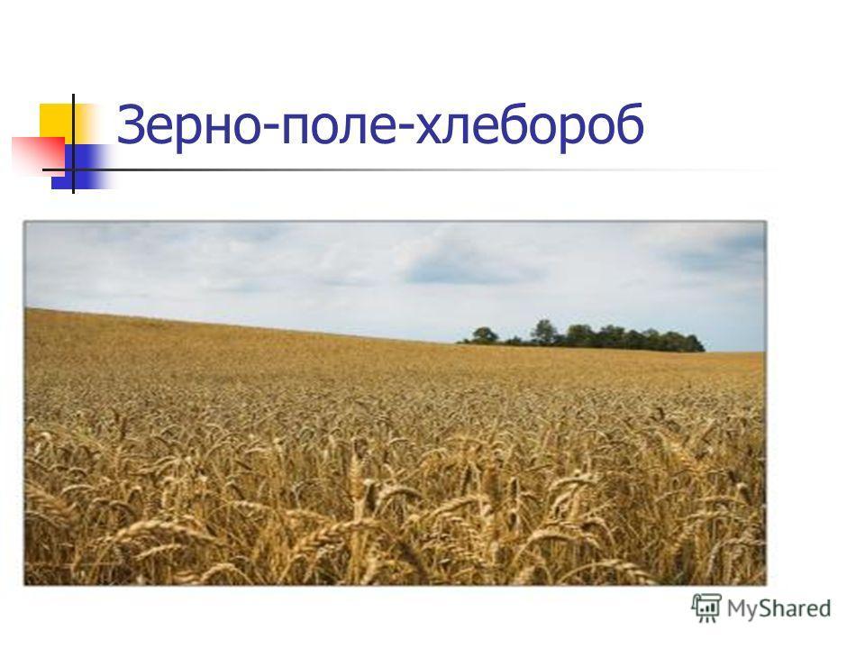 Зерно-поле-хлебороб