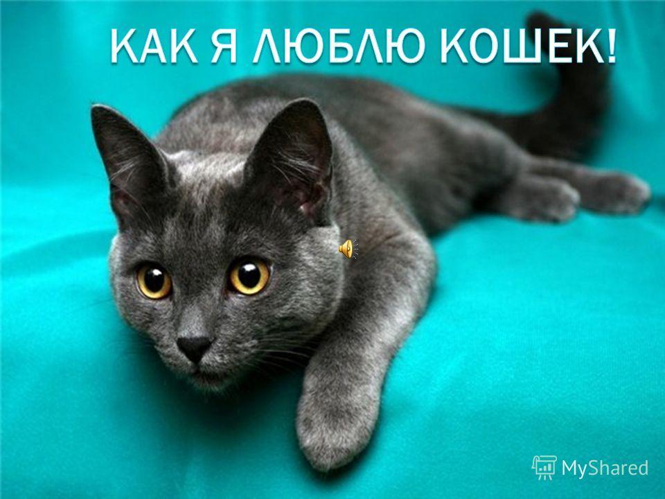3 кота и 1 кошка