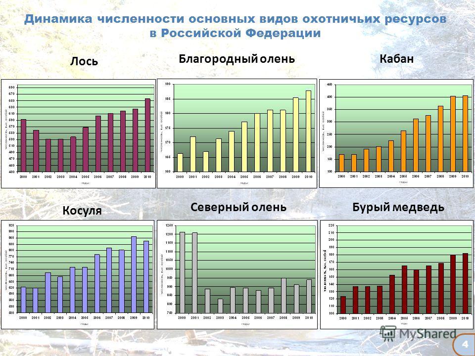 Динамика численности основных видов охотничьих ресурсов в Российской Федерации Лось Косуля Кабан Бурый медведь Северный олень Благородный олень 4