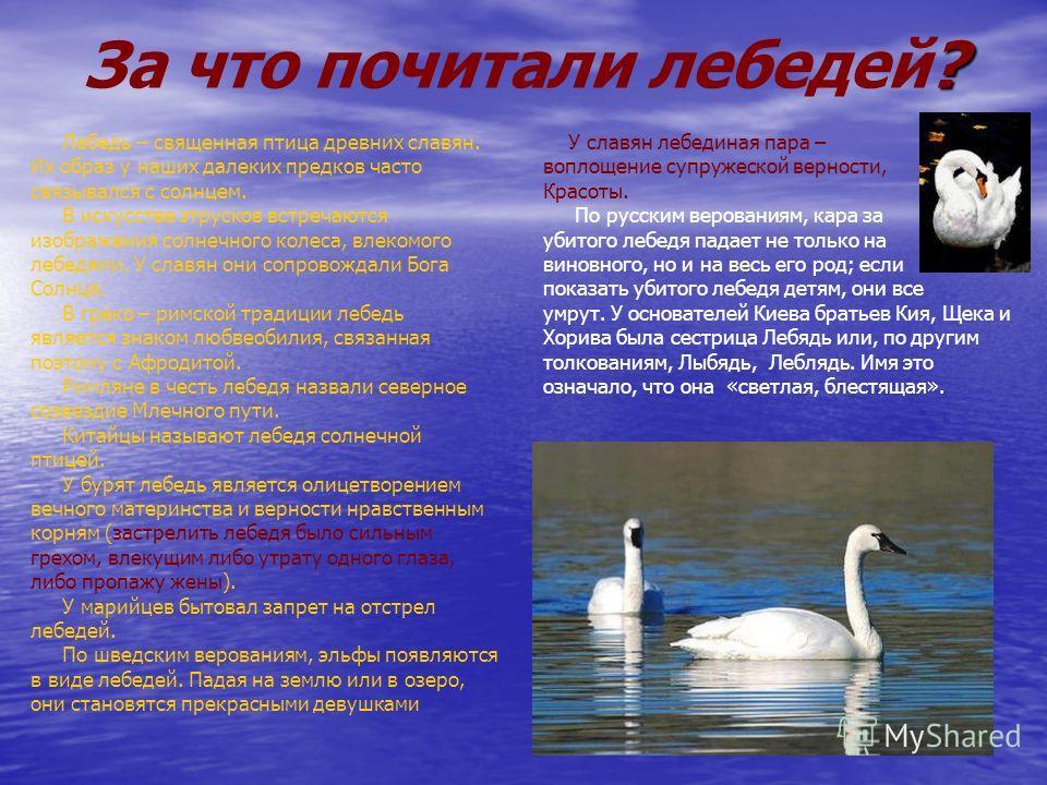 ? За что почитали лебедей? Лебедь – священная птица древних славян. Их образ у наших далеких предков часто связывался с солнцем. В искусстве зтрусков встречаются изображения солнечного колеса, влекомого лебедями. У славян они сопровождали Бога Солнца