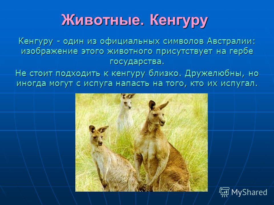Животные. Кенгуру Кенгуру - один из официальных символов Австралии: изображение этого животного присутствует на гербе государства. Не стоит подходить к кенгуру близко. Дружелюбны, но иногда могут с испуга напасть на того, кто их испугал.