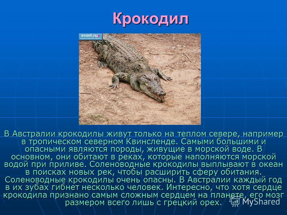 Крокодил В Австралии крокодилы живут только на теплом севере, например в тропическом северном Квинсленде. Самыми большими и опасными являются породы, живущие в морской воде. В основном, они обитают в реках, которые наполняются морской водой при прили