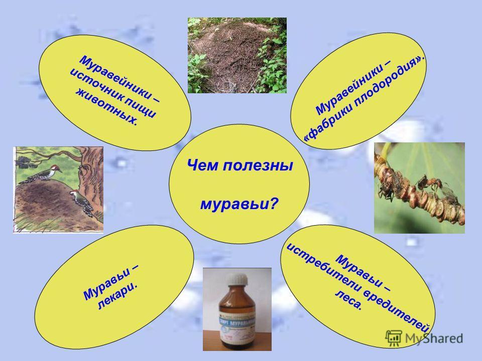 Чем полезны муравьи? Муравьи – лекари. Муравьи – истребители вредителей леса. Муравейники – источник пищи животных. Муравейники – «фабрики плодородия».