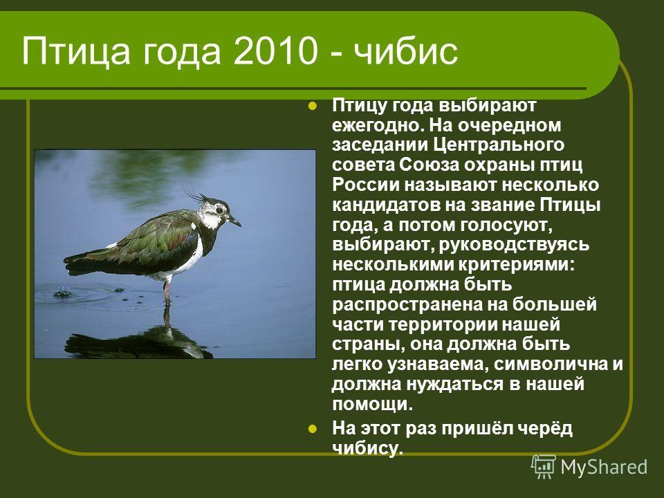 Птица года 2010 - чибис Птицу года выбирают ежегодно. На очередном заседании Центрального совета Союза охраны птиц России называют несколько кандидатов на звание Птицы года, а потом голосуют, выбирают, руководствуясь несколькими критериями: птица дол