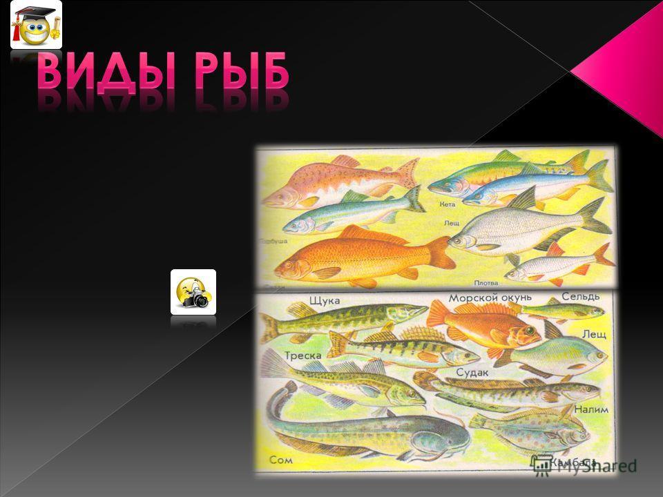 Определение возраста рыбы по её чешуе.
