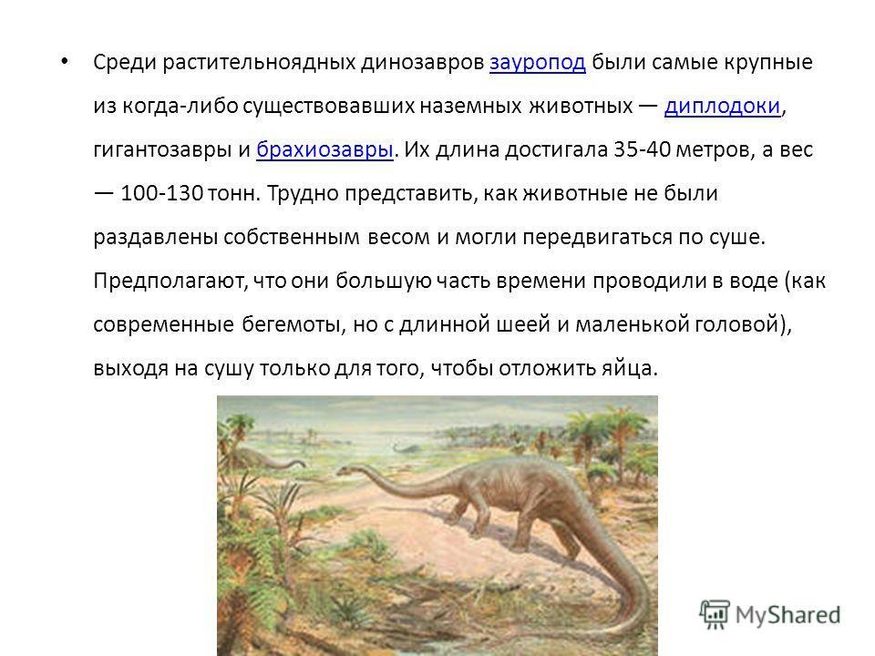 Среди растительноядных динозавров зауропод были самые крупные из когда-либо существовавших наземных животных диплодоки, гигантозавры и брахиозавры. Их длина достигала 35-40 метров, а вес 100-130 тонн. Трудно представить, как животные не были раздавле