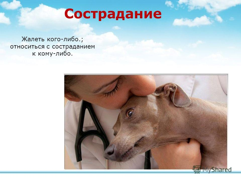 Сострадание Жалеть кого-либо.; относиться с состраданием к кому-либо.