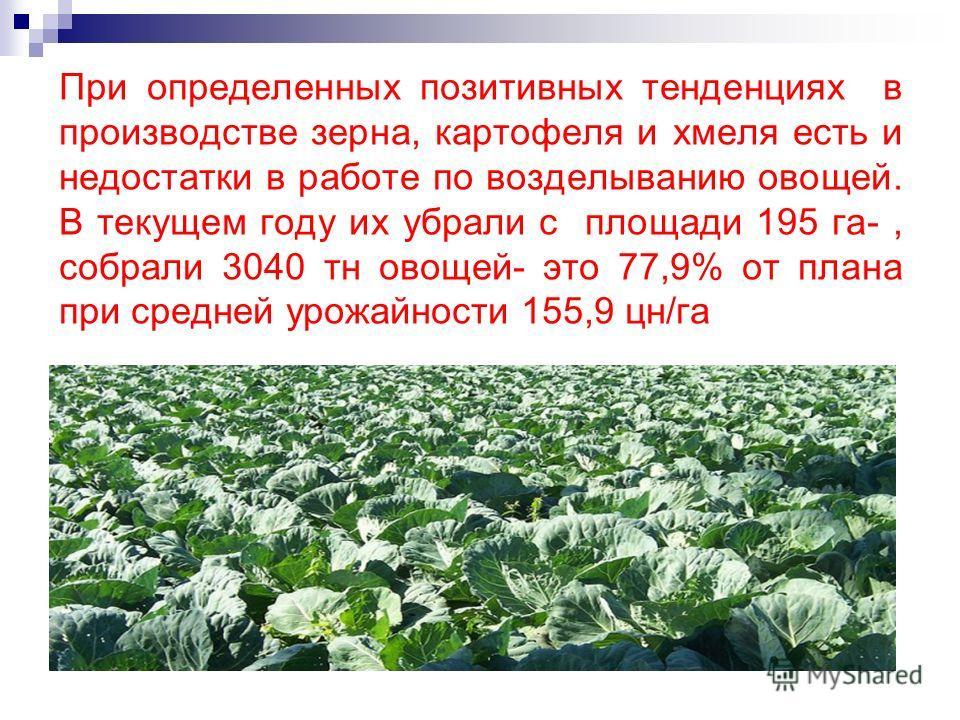 При определенных позитивных тенденциях в производстве зерна, картофеля и хмеля есть и недостатки в работе по возделыванию овощей. В текущем году их убрали с площади 195 га-, собрали 3040 тн овощей- это 77,9% от плана при средней урожайности 155,9 цн/