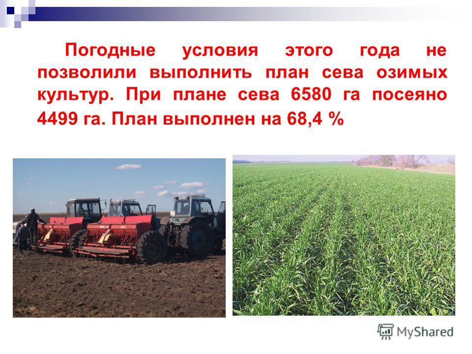 Погодные условия этого года не позволили выполнить план сева озимых культур. При плане сева 6580 га посеяно 4499 га. План выполнен на 68,4 %