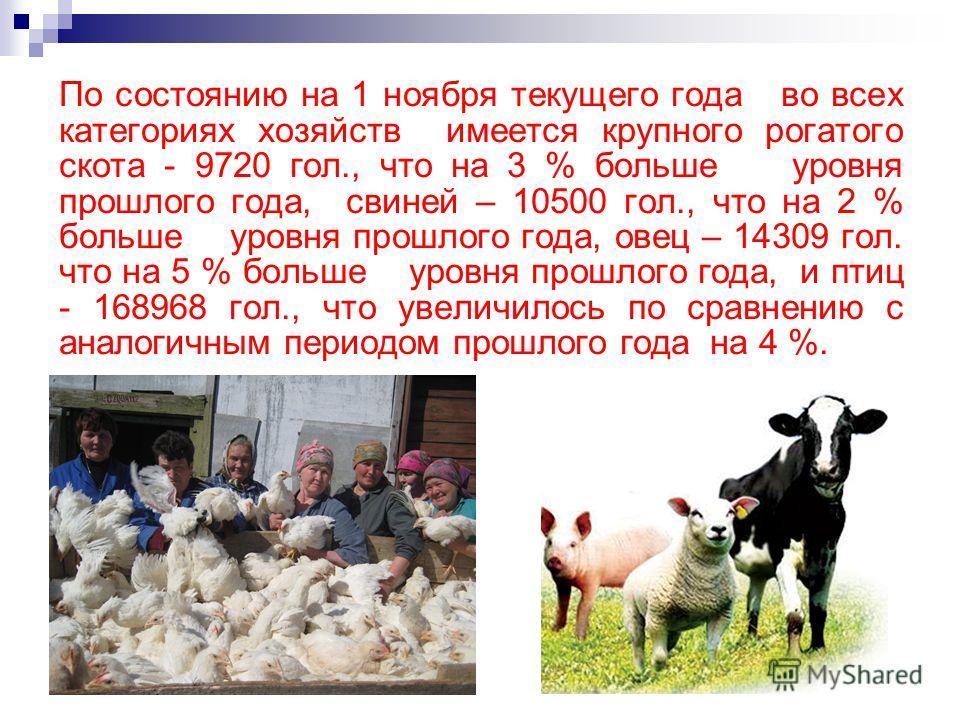 По состоянию на 1 ноября текущего года во всех категориях хозяйств имеется крупного рогатого скота - 9720 гол., что на 3 % больше уровня прошлого года, свиней – 10500 гол., что на 2 % больше уровня прошлого года, овец – 14309 гол. что на 5 % больше у