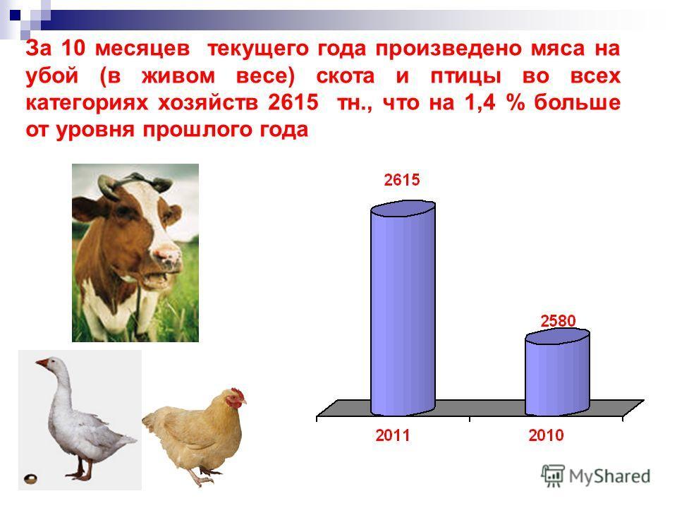 За 10 месяцев текущего года произведено мяса на убой (в живом весе) скота и птицы во всех категориях хозяйств 2615 тн., что на 1,4 % больше от уровня прошлого года